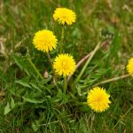 Reasons Why Weed is Growing in your Lawn